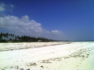 Our beautiful coastline