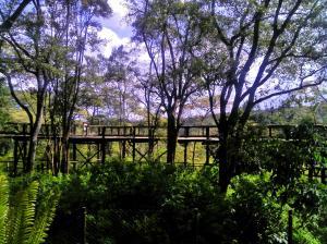 The beautiful safari walk
