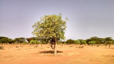 My livestock market project site somewhere in northern Kenya