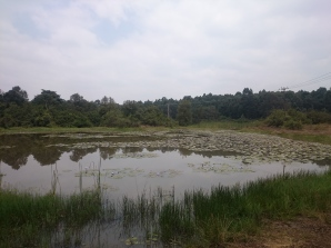 beautiful lily's lake