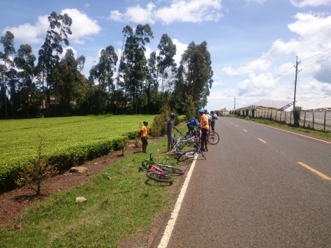 bikers paradise: tea farms, fresh air, cool breeze and little traffic