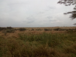 somewhere in that picture there are gazelles