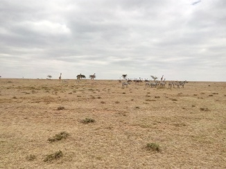 If you look carefully, you will see zebras, giraffes and I can't recall what else