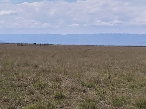 if you zoom into this picture you will see some gazelles