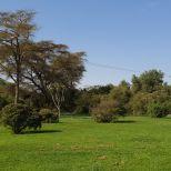 The grass.....